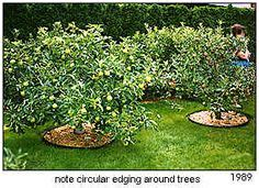 backyard apple orchard kitchen gardens and orchards on pinterest colonial