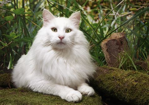 can a and cat mate 10 cat breeds who enjoy canine playmates