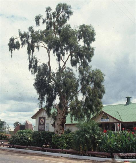 the tree 1991 tree of knowledge barcaldine 1991 queensland