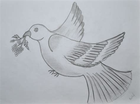 7 Drawing Pencil by Pics For Gt Doves Drawings Pencil