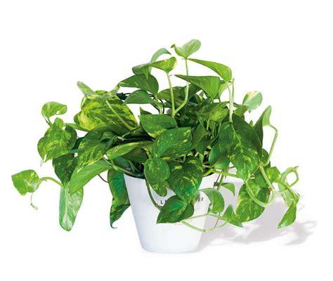 decoracion de interiores con plantas de sombra plantas de sombra para decorar y como cuidarlas