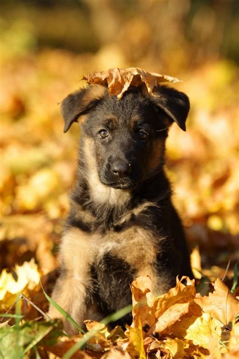 fall puppies the world s catalog of ideas