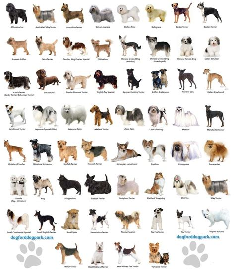 all small breeds small breeds chart jaddid hd wallpapers backgrounds images photos