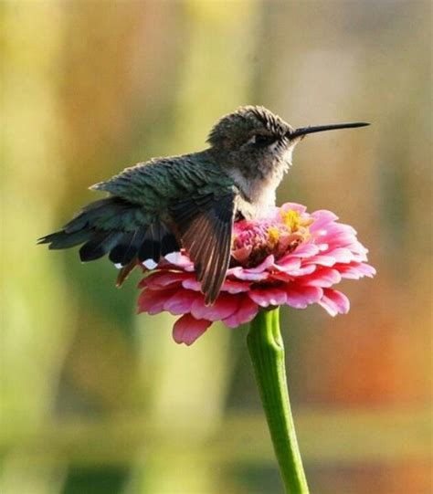 baby hummingbird twitterpated pinterest