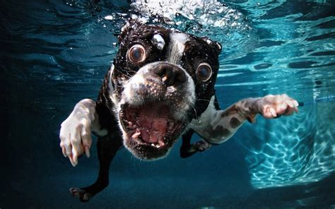 underwater dogs photographs  dogs underwater  seth