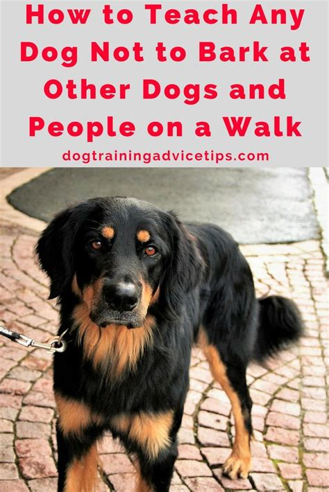 how to your not to bark on walks best 25 barking at nothing ideas on barking and