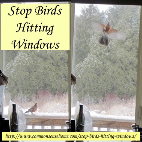 stop birds hitting windows self sufficiency