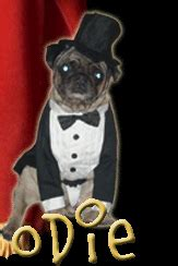odie the pug animal radio 274