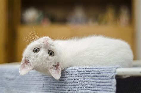 alimentazione gatto alimentazione gatto 3 mesi come deve essere dogalize