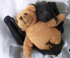 Giant Panda Stuffed Animal Cute Bats These Cute Bat Pictures Will Blow Your Mind