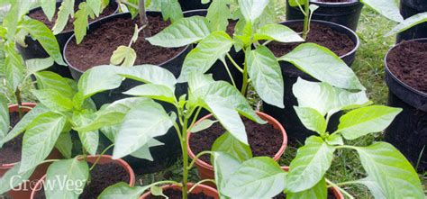 Sowing and Protecting Healthy Seedlings