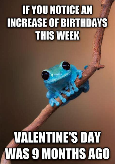 November Birthday Meme - the frog has a point the meta picture