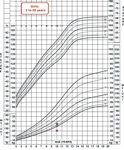 goldendoodle puppy weight chart growth chart for goldendoodles breeds picture