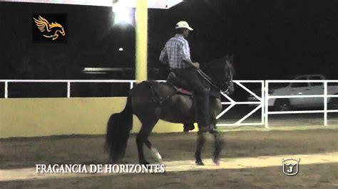 caballo de la sabana youtube fragancia de horizontes trocha colombiana criadero dulce