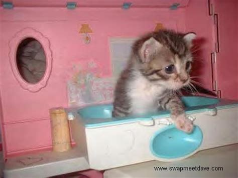cat peeing in bathtub give your cat a bath and come away scratch free