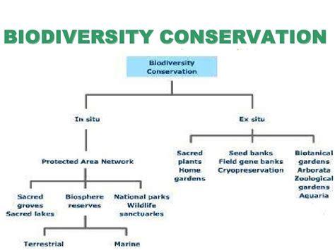 Essay Biodiversity Conservation Environment by Conservation Ecosystem Essay