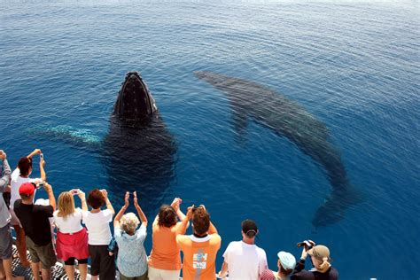 house melbourne cup hervey bay whale in queensland australia welcome to your queensland guide queensland