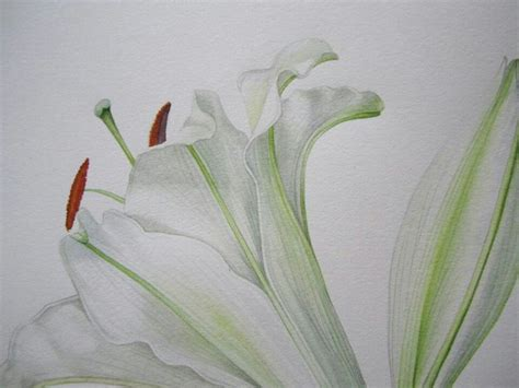 billy showells botanical painting billy showell botanical art