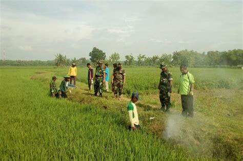 Cara Melakukan Aborsi Cepu Pengasapan Cara Petani Desa Gondang Melawan Tikus Bloranews