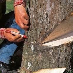 abattre un arbre 224 la 231 onneuse