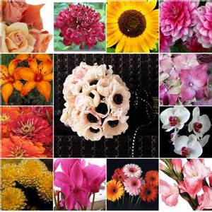 fall flowers in season wedding flowers in season find wedding flower availabilities and colors platinum invitations