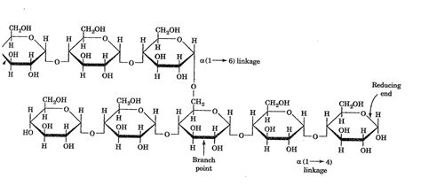 diagram of a polysaccharide polysaccharides biochemaddict21