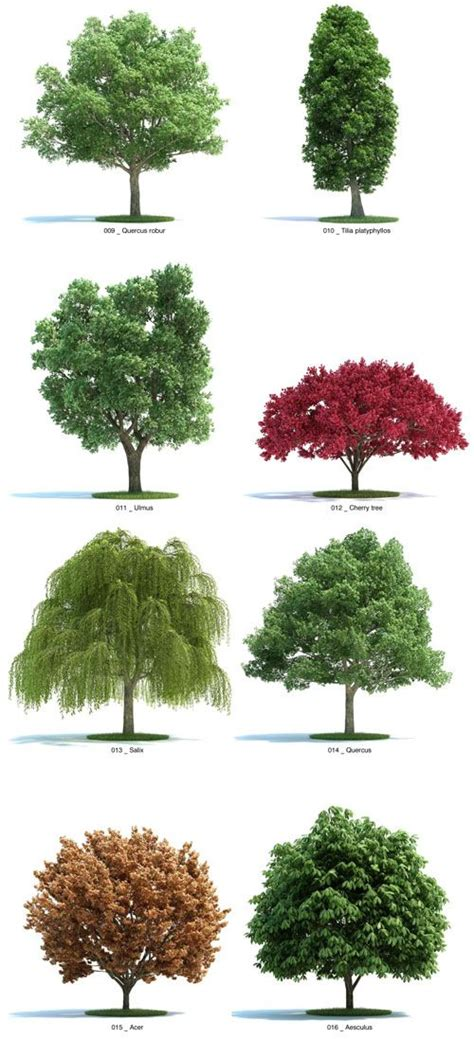 botanical trees tree types 1 landscaping pinterest trees sheds and charts on pinterest