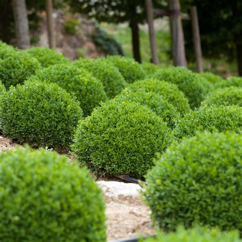 Bushes For Landscaping 6 Low Maintenance Landscaping Shrubs Tomlinson Bomberger