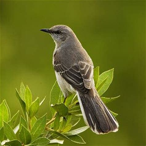 best new hshire birding spots bird watching in nh