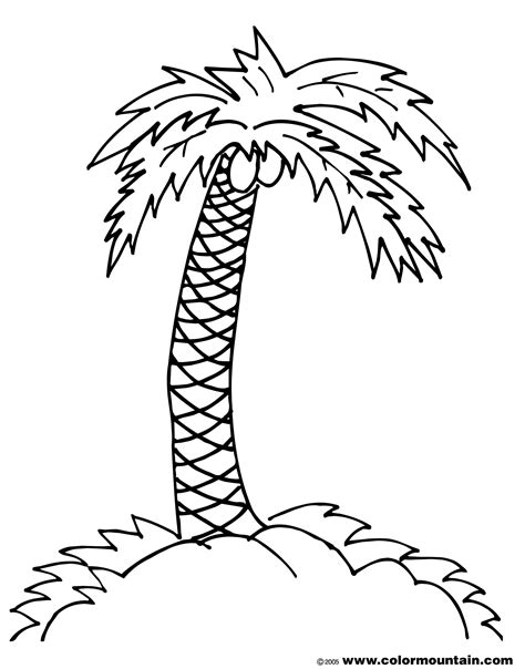 Palm Tree Coloring Pages For Kids Coloring Home Palm Tree Coloring Page