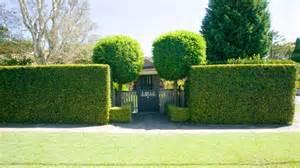 Plants For Backyard Landscaping Best Lilly Pilly Varieties Burke S Backyard