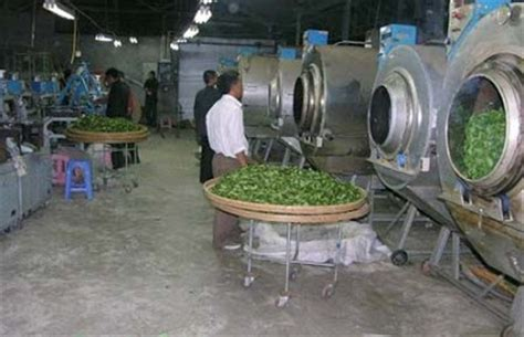 the cultivation and manufacture of tea classic reprint books cha qu 茶趣 green tea production process