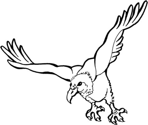 turkey vulture coloring page flying vulture coloring page supercoloring com