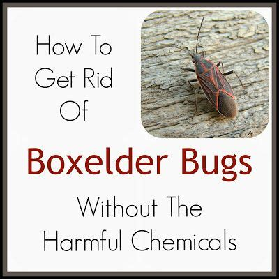 Bathroom Bugs How To Get Rid Of Them 17 Best Images About Insect Problems On
