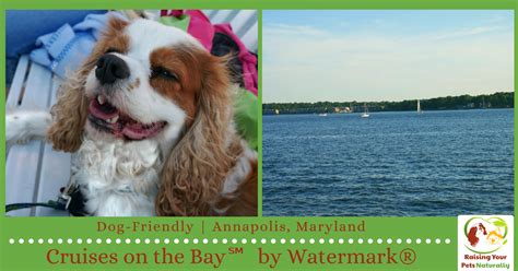 boat harbour kurnell dog friendly dog friendly annapolis maryland activities dog friendly
