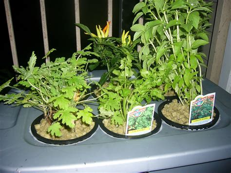 Hydroponics   at Home and for Beginners