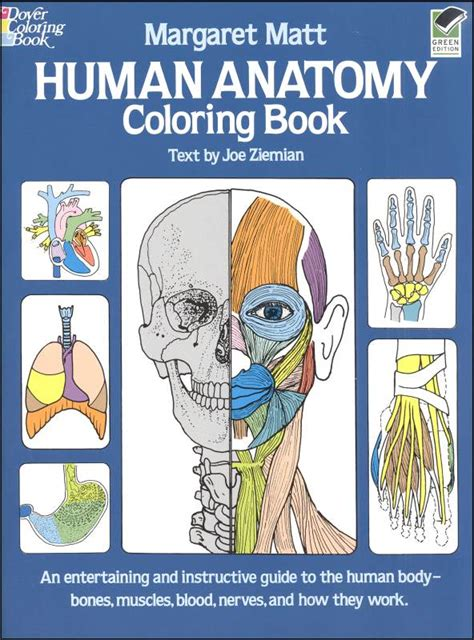 anatomy coloring book chapter 4 human anatomy coloring book