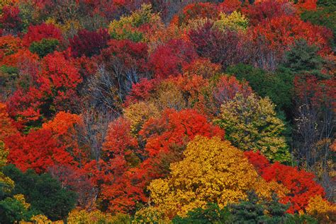 fall colors fall color some fall color looks like flowers at a