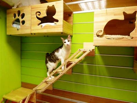 indoor cat house pet house design cat