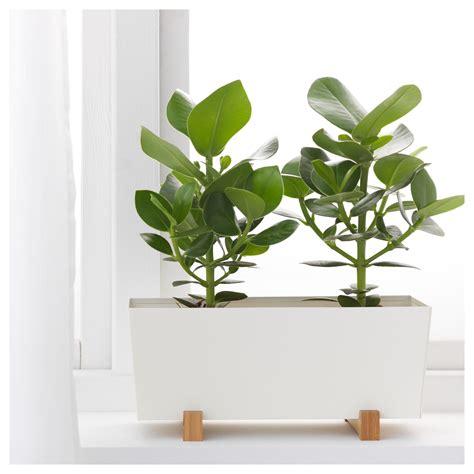 ikea plant pots bittergurka plant pot white 32x15 cm ikea
