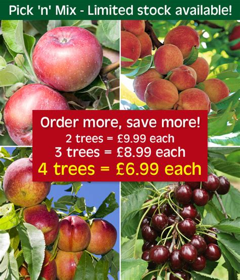 order fruit trees thompson fruit trees from just 163 6 99 milled