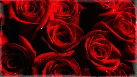imagenes rosas rojas gratis de rosas rojas gratis related keywords de rosas rojas