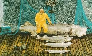 kaluga hausen a brief history of sturgeons cites cites
