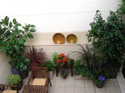 decorar con plantas un patio decorar mi patio con plantas