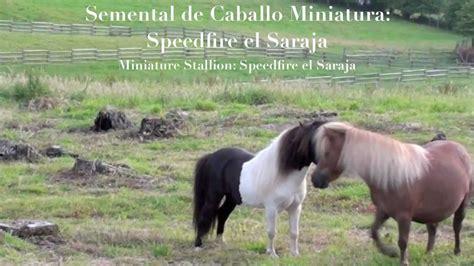 httpgozando mujer y caballo semental quot caballo miniatura quot youtube