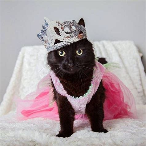 8 Ways To Dress Up Your Or Cat by 14 Kitties Dressed Up For Dress Up Your Pets Day Cattime