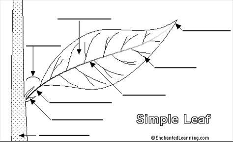 Beschriftung Laubblatt by Simple Leaf Diagram Www Pixshark Images Galleries
