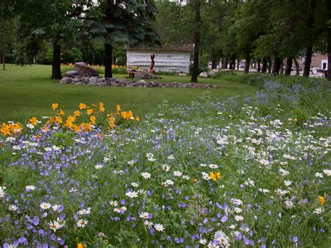 Prairie Lawn And Garden by Garden Projects Kathryn Lipke