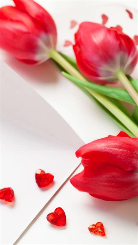 wallpaper tulip   wallpaper spring flower red