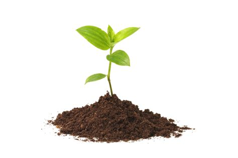 cool small palnts to grow pj goes gardening jewish federation of the lehigh valley